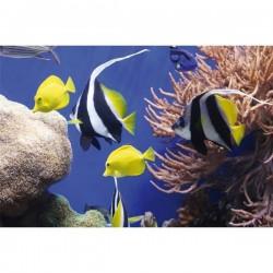Fellowes Earth Series™ podložka pod myš, morské ryby FE590930